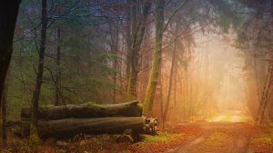 automne-vie-sophrologue-annecy